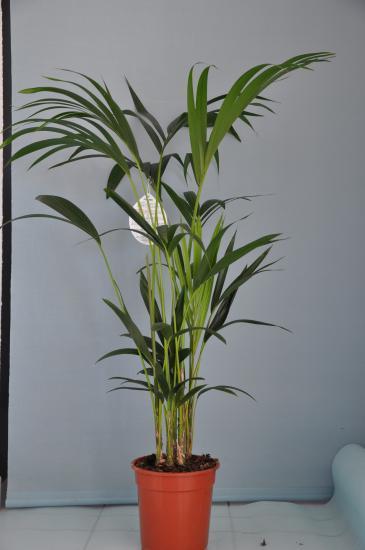 plantes d u0026 39 appartement