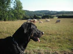 je suis trfès interressé par les vaches