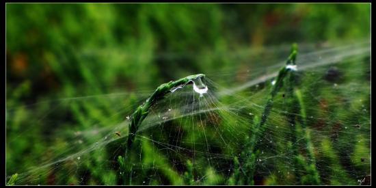 Toile de Maître tissée par une araignée