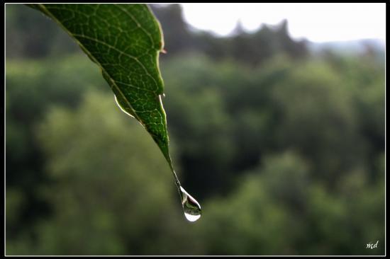 transparence d'une goutte d'eau
