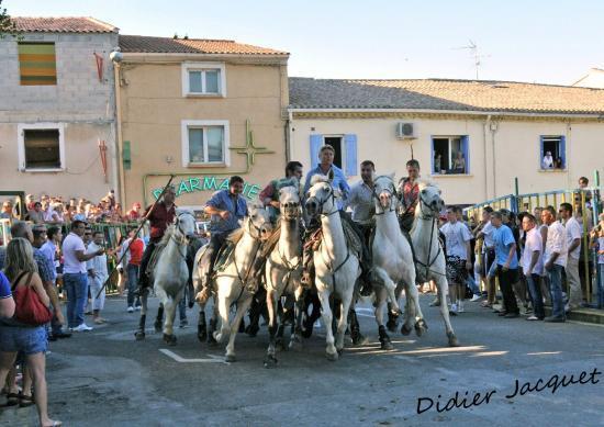 Les cavaliers de la manade des Alpilles
