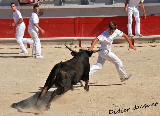 Maxime Carrasco et le N° 521 de Blanc-Espelly