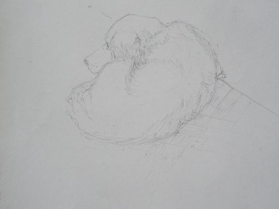Le chien. Crayon. 1999