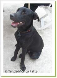 Cocaze, jeune chien à adopter