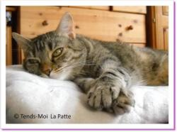 Zina, chat à adopter