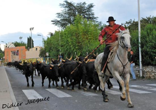 Bernard Gros seul devant les 40 taureaux