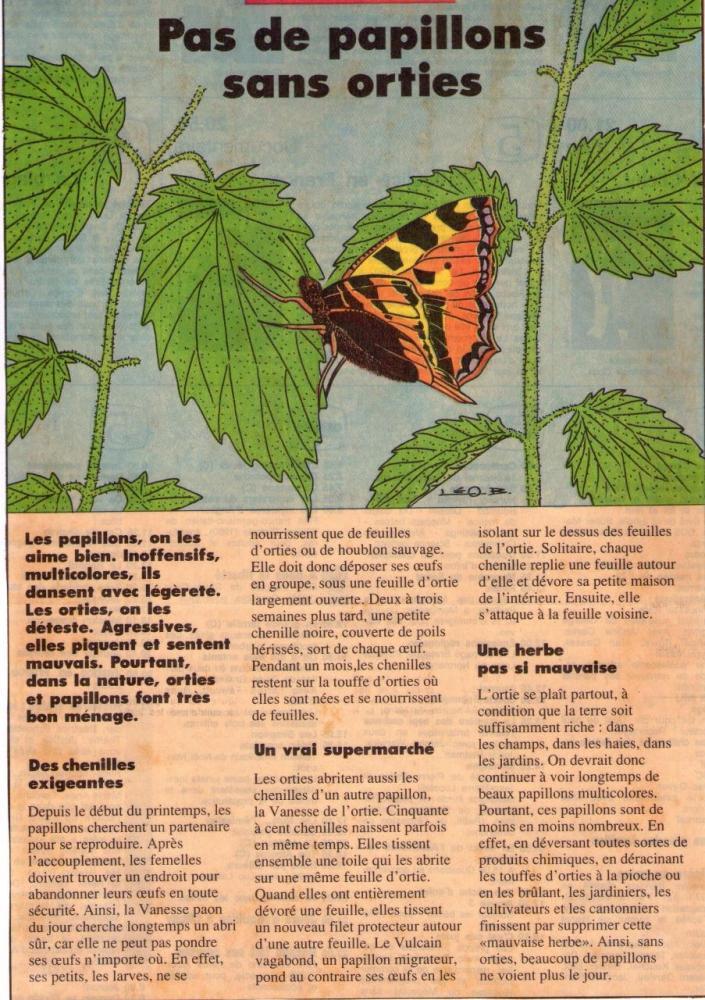 Les Orties une plante salvatrice pour les papillons Coll. octobre 1983