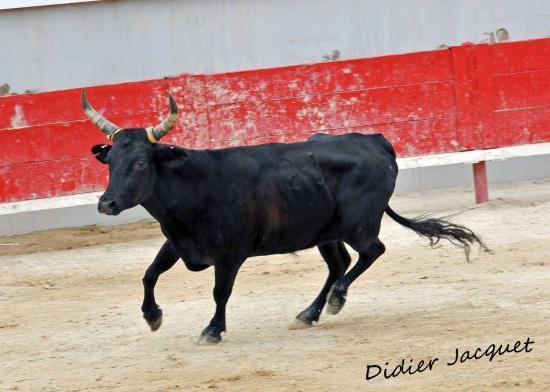 Aragon de la manade de L'Argentière