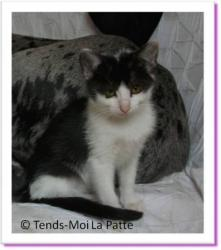 Felinedra, chaton à adopter