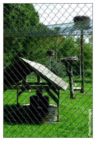 L'enclos aux cigognes de Hindlingen.jpeg