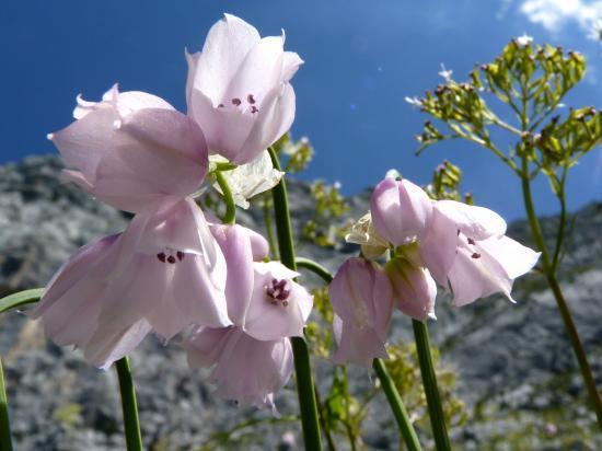 Site de fleurs d 39 orchid es for Site de fleurs