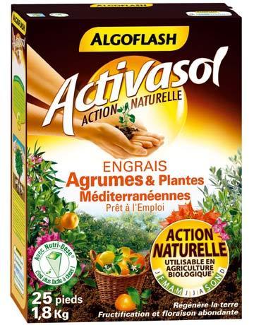 Les agrumes for Arrosage amaryllis pendant la floraison