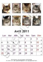 Avril 2011 - A4 - Chats