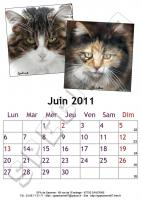 Juin 2011 - A4 - Chats