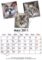 Mars 2011 - A4 - Chats