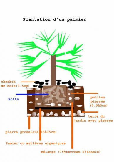 plantation d'une plante exotique