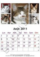 Août 2011 - A4 - Chats