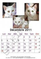 Décembre 2011 - A4 - Chats