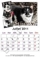 Juillet 2011 - A4 - Chats