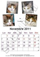 Novembre 2011 - A4 - Chats