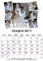 Octobre 2011 - A4 - Chats