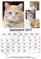 Septembre 2011 - A4 - Chats
