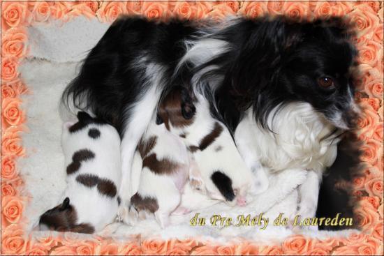 betsy et ses bébés