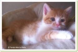 Cacahouète, chaton à adopter