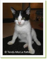 Fanta, chaton à adopter