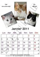 Calendrier A4 - Janvier 2011 - Chats