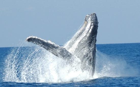 http://s3.e-monsite.com/2010/09/13/06/resize_550_550//baleine18.jpg