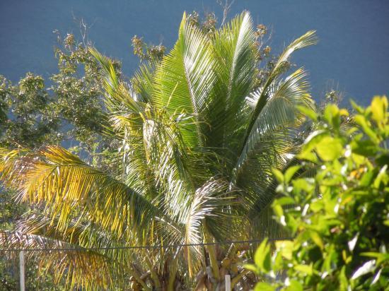 jeu de soleil sur cocotier à 50m de la maison