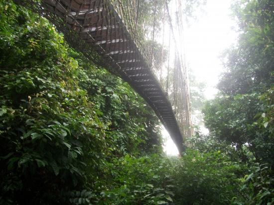 Canopy walway
