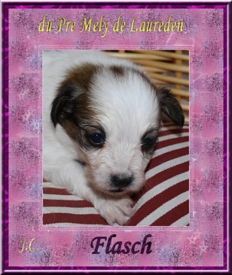 flasch