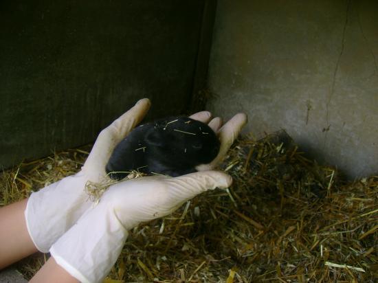 bébé noir à 11 jours
