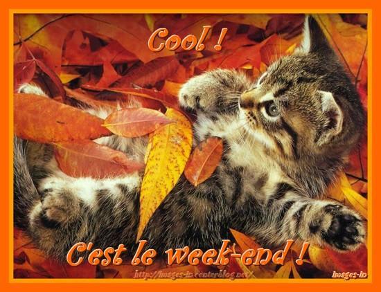NOUS Y VOILA  dans BONJOUR chat-automne-week-end