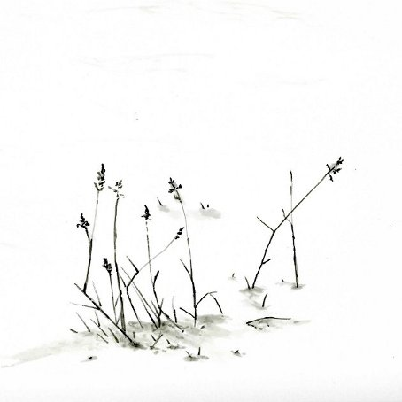 herbes et neige
