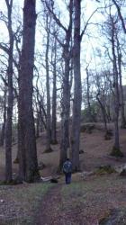 Rene en el bosque - Comunidad mapuce cerca San Martin