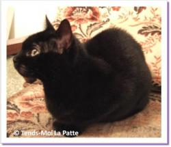 Louna, chatte à adopter Paris