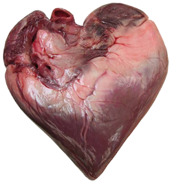 cancer coeur