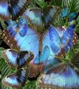 La barque aux papillons - Jean-Claude Delagneau