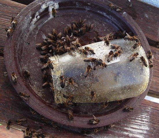Les abeilles de Nathy