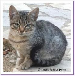 Lila, chatonne à adopter Paris
