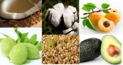 montage huile végétale