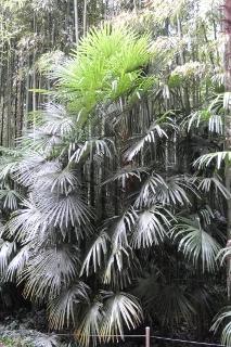 La Bambouseraie 2009