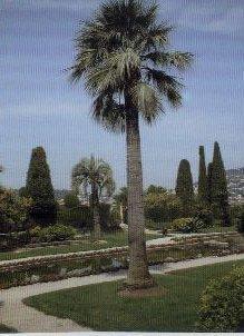 AG Nice 2003