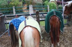 les trois welsh à Aumale!