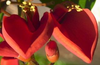 Sexualité et vieillissement dans La Sexualité Sacrée fleur-coeur-rouge