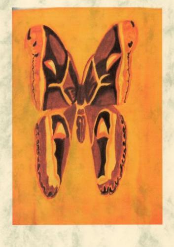 Attacus atlas dessin de http://cassiopee1e-monsite.com généreusement offert par la webmaster, avec mes sincères remerciements. S