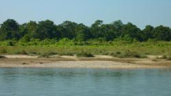 Rive de la Rapti à Sauraha (Chitwan)